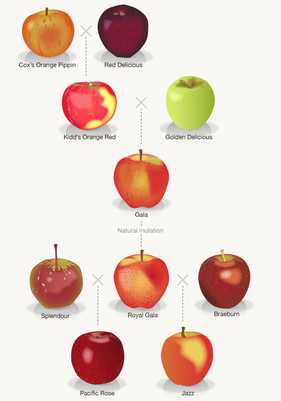 Protecting Apple Images Agricultural Biodiversity Weblog